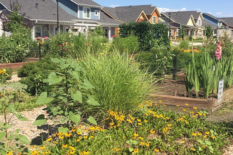 At The Avenues, Gardening for Health and Fitness is a Foundation of Independent Living