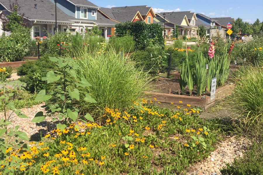 Avenues Resident Paul Explains How Community Gardens Helped Him Plant Roots
